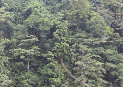 Mountain hardwood forest in Nepal